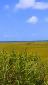 sea isle marsh