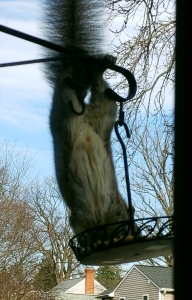 squirrel in feeder